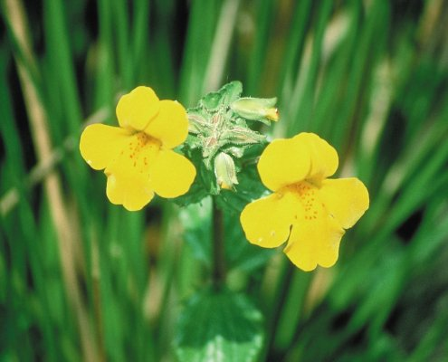 Back Flower Remedies